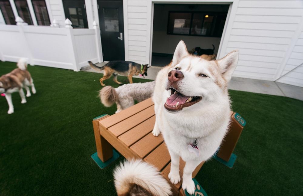 Project 6 - Dog Breed Classifier